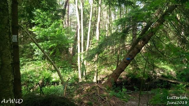 Die Wunderbäume von Lutterloh (1)