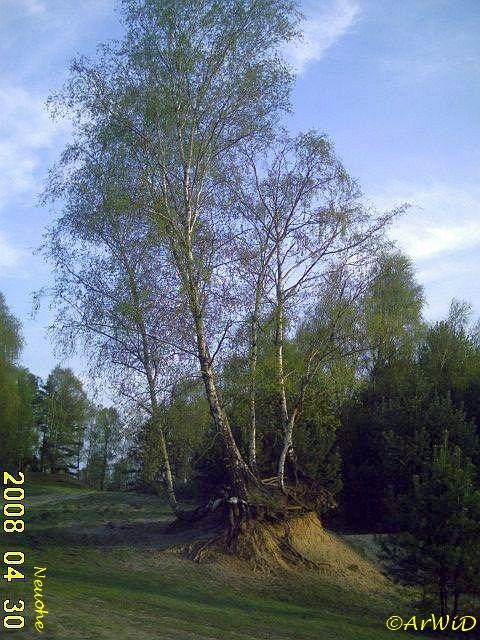 Baum I