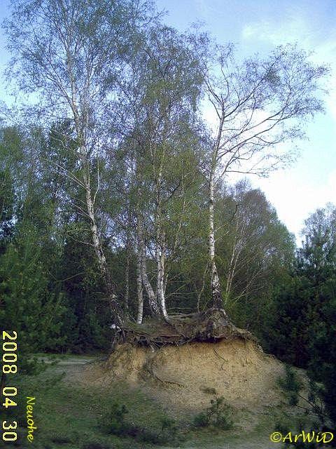 Baum II