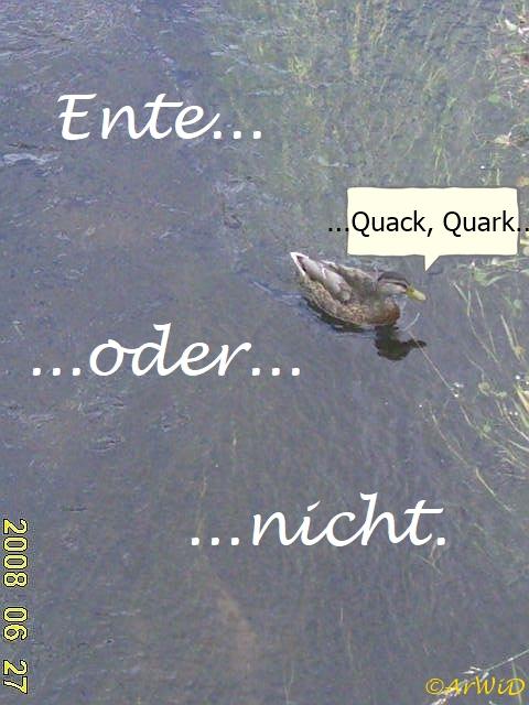 Ente oder nicht