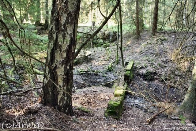 ©Fabrik im Wald bei Schelploh (14)