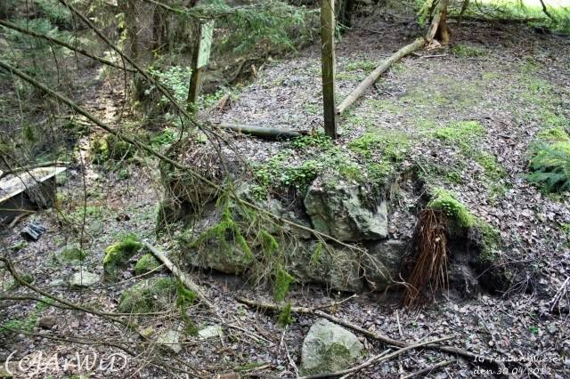 ©Fabrik im Wald bei Schelploh (5)