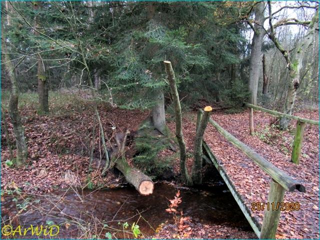 ©Bäume am Bach (4)