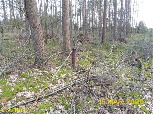 ©Schranke im Wald (2)